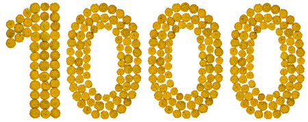 Arabic numeral 1000, one thousand, from yellow flowers of tansy, isolated on white background The tansy - a plant of the daisy family with yellow flat-topped buttonlike flower heads and aromatic leaves, formerly used in cooking and medicine. Фото со стока