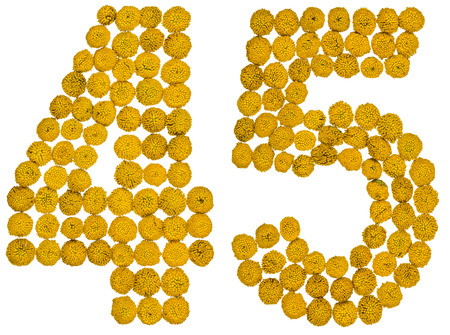computation: Arabic numeral 45, forty five, from yellow flowers of tansy, isolated on white background The tansy - a plant of the daisy family with yellow flat-topped buttonlike flower heads and aromatic leaves, formerly used in cooking and medicine. Stock Photo