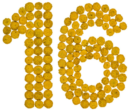 computation: Arabic numeral 16, sixteen, from yellow flowers of tansy, isolated on white background The tansy - a plant of the daisy family with yellow flat-topped buttonlike flower heads and aromatic leaves, formerly used in cooking and medicine.
