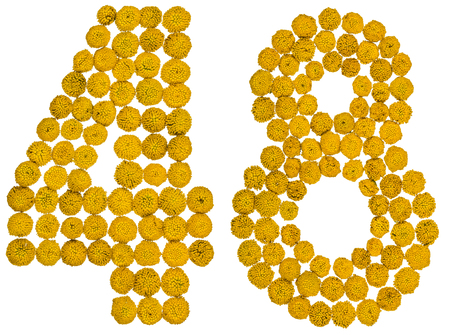 computation: Arabic numeral 48, forty eight, from yellow flowers of tansy, isolated on white background The tansy - a plant of the daisy family with yellow flat-topped buttonlike flower heads and aromatic leaves, formerly used in cooking and medicine. Stock Photo