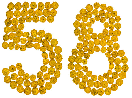 computation: Arabic numeral 58, fifty eight, from yellow flowers of tansy, isolated on white background The tansy - a plant of the daisy family with yellow flat-topped buttonlike flower heads and aromatic leaves, formerly used in cooking and medicine.