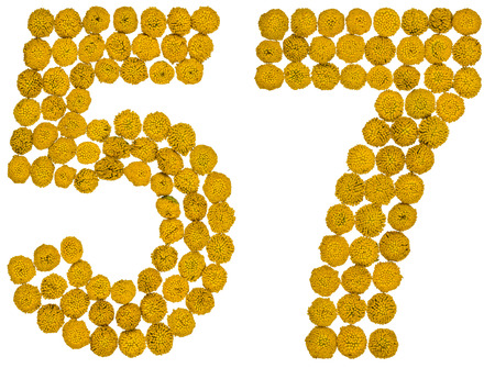 ordinal: Arabic numeral 57, fifty seven, from yellow flowers of tansy, isolated on white background The tansy - a plant of the daisy family with yellow flat-topped buttonlike flower heads and aromatic leaves, formerly used in cooking and medicine. Stock Photo