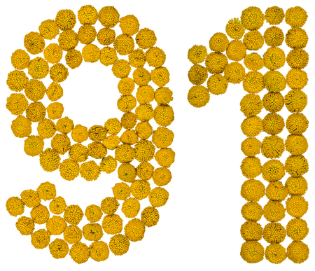 ninety: Arabic numeral 91, ninety one, from yellow flowers of tansy, isolated on white background The tansy - a plant of the daisy family with yellow flat-topped buttonlike flower heads and aromatic leaves, formerly used in cooking and medicine.