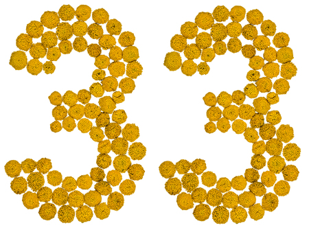 Arabic numeral 33, thirty three, from yellow flowers of tansy, isolated on white background The tansy - a plant of the daisy family with yellow flat-topped buttonlike flower heads and aromatic leaves, formerly used in cooking and medicine. Stock Photo