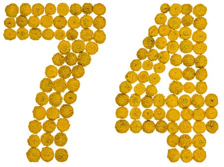computation: Arabic numeral 74, seventy four, from yellow flowers of tansy, isolated on white background The tansy - a plant of the daisy family with yellow flat-topped buttonlike flower heads and aromatic leaves, formerly used in cooking and medicine.