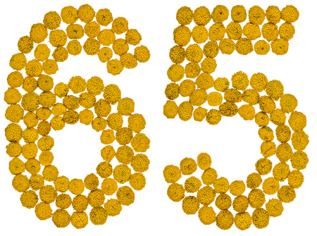 Arabic numeral 65, sixty five, from yellow flowers of tansy, isolated on white background The tansy - a plant of the daisy family with yellow flat-topped buttonlike flower heads and aromatic leaves, formerly used in cooking and medicine.