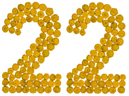 ordinal: Arabic numeral 22, twenty two, from yellow flowers of tansy, isolated on white background The tansy - a plant of the daisy family with yellow flat-topped buttonlike flower heads and aromatic leaves, formerly used in cooking and medicine.