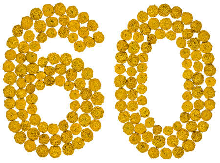Arabic numeral 60, sixty, from yellow flowers of tansy, isolated on white background The tansy - a plant of the daisy family with yellow flat-topped buttonlike flower heads and aromatic leaves, formerly used in cooking and medicine.