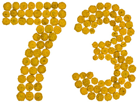 computation: Arabic numeral 73, seventy three, from yellow flowers of tansy, isolated on white background The tansy - a plant of the daisy family with yellow flat-topped buttonlike flower heads and aromatic leaves, formerly used in cooking and medicine.