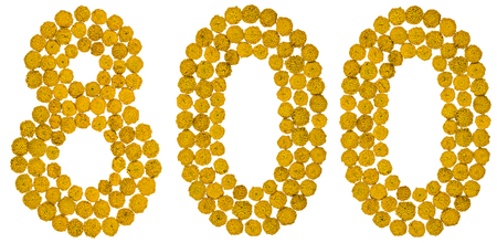 ordinal: Arabic numeral 800, eight hundred, from yellow flowers of tansy, isolated on white background The tansy - a plant of the daisy family with yellow flat-topped buttonlike flower heads and aromatic leaves, formerly used in cooking and medicine. Stock Photo