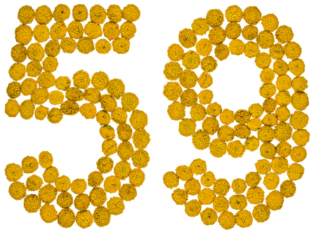 ordinal: Arabic numeral 59, fifty nine, from yellow flowers of tansy, isolated on white background The tansy - a plant of the daisy family with yellow flat-topped buttonlike flower heads and aromatic leaves, formerly used in cooking and medicine.