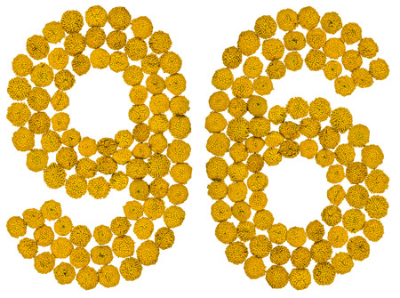 computation: Arabic numeral 96, ninety six, from yellow flowers of tansy, isolated on white background The tansy - a plant of the daisy family with yellow flat-topped buttonlike flower heads and aromatic leaves, formerly used in cooking and medicine.