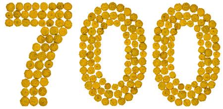 白い背景で隔離のアラビア数字 700、700、タンジーの黄色の花から タンジー - 黄色の平たいボタン花頭と芳香族葉、料理や医学のかつてヒナギク家族