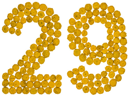 Arabic numeral 29, twenty nine, from yellow flowers of tansy, isolated on white background The tansy - a plant of the daisy family with yellow flat-topped buttonlike flower heads and aromatic leaves, formerly used in cooking and medicine.