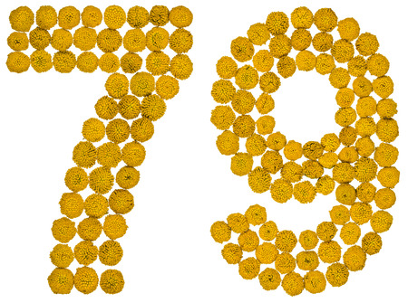 ordinal: Arabic numeral 79, seventy nine, from yellow flowers of tansy, isolated on white background The tansy - a plant of the daisy family with yellow flat-topped buttonlike flower heads and aromatic leaves, formerly used in cooking and medicine.