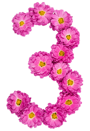 Arabic numeral 3, three, from flowers of chrysanthemum, isolated on white background