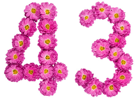 Arabic numeral 43, forty three, from flowers of chrysanthemum, isolated on white background Stock Photo