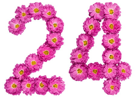 Arabic numeral 24, twenty four, from flowers of chrysanthemum, isolated on white background Stock Photo