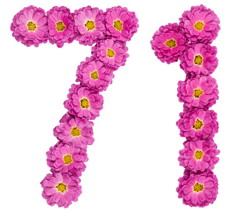 Arabic numeral 71, seventy one, from flowers of chrysanthemum, isolated on white background