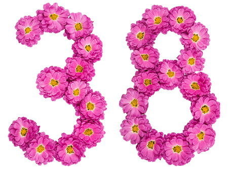 Arabic numeral 38, thirty eight, from flowers of chrysanthemum, isolated on white background