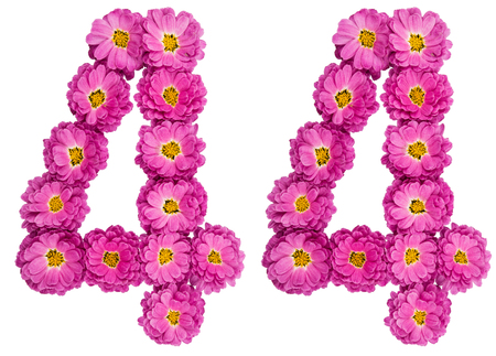 Arabic numeral 44, forty four, from flowers of chrysanthemum, isolated on white background