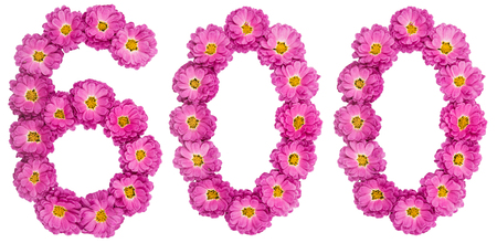 Arabic numeral 600, six hundred, from flowers of chrysanthemum, isolated on white background Stock Photo