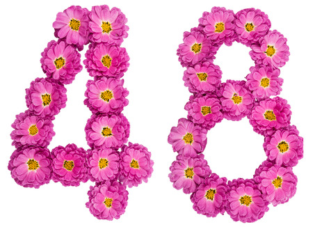 Arabic numeral 48, forty eight, from flowers of chrysanthemum, isolated on white background