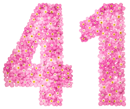 Arabic numeral 41, forty one, from pink forget-me-not flowers, isolated on white background