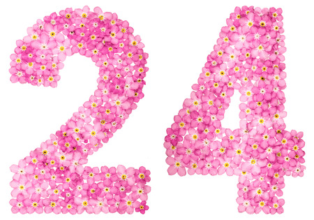 Arabic numeral 24, twenty four, from pink forget-me-not flowers, isolated on white background Stock Photo