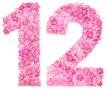 Arabic numeral 12, twelve, from pink forget-me-not flowers, isolated on white background