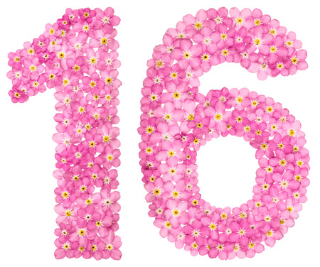 Arabic numeral 16, sixteen, from pink forget-me-not flowers, isolated on white background