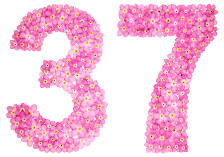 Arabic numeral 37, thirty seven, from pink forget-me-not flowers, isolated on white background 스톡 콘텐츠