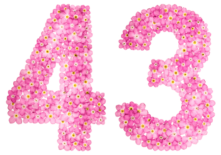 Arabic numeral 43, forty three, from pink forget-me-not flowers, isolated on white background Stock Photo
