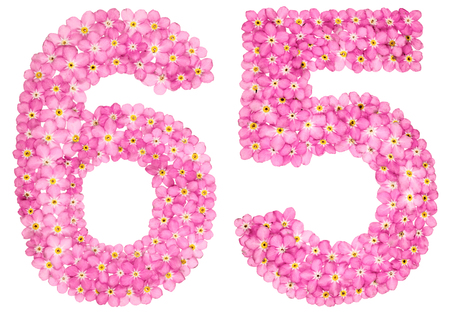 Arabic numeral 65, sixty five, from pink forget-me-not flowers, isolated on white background