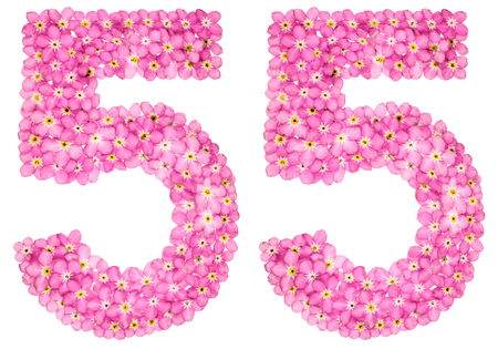 Arabic numeral 55, fifty five, from pink forget-me-not flowers, isolated on white background Фото со стока