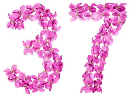 Arabic numeral 37, thirty seven, from flowers of viola, isolated on white background Stock Photo