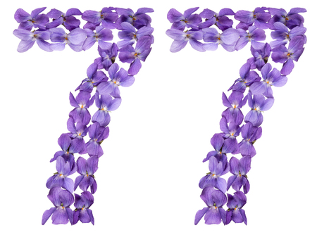 Arabic numeral 77, seventy seven, from flowers of viola, isolated on white background Stock Photo