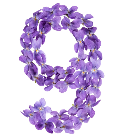 Arabic numeral 9, nine, from flowers of viola, isolated on white background 免版税图像