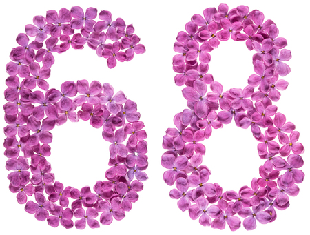 Arabic numeral 8, sixty eight, from flowers of lilac, isolated on white background Archivio Fotografico - 101198712