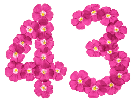 Arabic numeral 43, forty three, from pink flowers of flax, isolated on white background