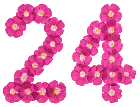 Arabic numeral 24, twenty four, from pink flowers of flax, isolated on white background