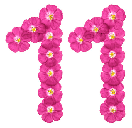 Arabic numeral 11, eleven, from pink flowers of flax, isolated on white background
