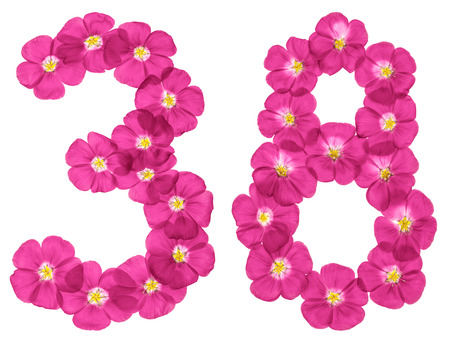 Arabic numeral 38, thirty eight, from pink flowers of flax, isolated on white background Stock Photo