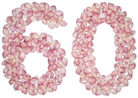 Arabic numeral 60, sixty, from flowers of hydrangea, isolated on white background