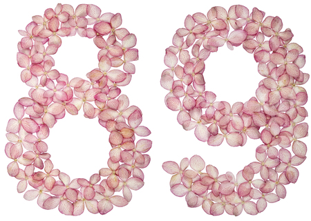 Arabic numeral 89, eighty nine, from flowers of hydrangea, isolated on white background