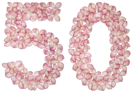 Arabic numeral 50, fifty, from flowers of hydrangea, isolated on white background