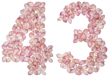 Arabic numeral 43, forty three, from flowers of hydrangea, isolated on white background