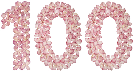 Arabic numeral 100, one hundred, from flowers of hydrangea, isolated on white background