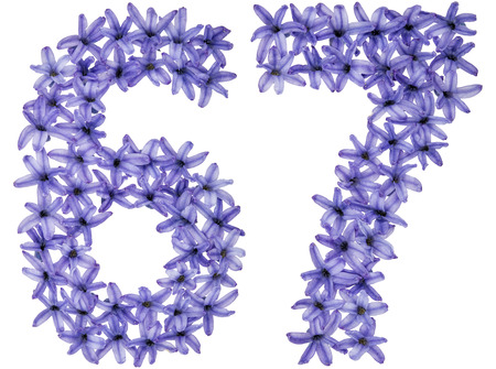 Numeral 67, sixty seven, from natural flowers of hyacinth, isolated on white background
