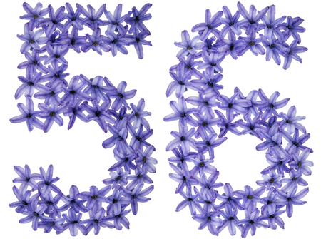 Numeral 56, fifty six, from natural flowers of hyacinth, isolated on white background